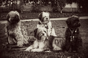 The original pack, Mo, Seba, Kaya and Tashi