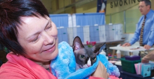 Ethel-with-Jaxx-the-tuxedo-Sphynx-cat-wrapped-up-in-a-blue-blanket