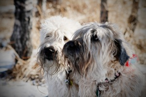 Brody & Shayla