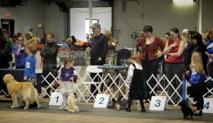 All lined up for judging...the dog in #3 spot kept laying down :)