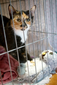 Tris-the-kitten-and-her-stuffed-owl